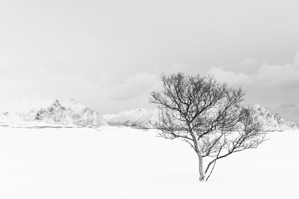 IMG_3080 Moland Baum Schnee